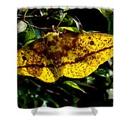 Imperial Moth Din053 Shower Curtain