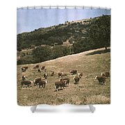 In A Pasture Near Pleasanton Hereford Shower Curtain