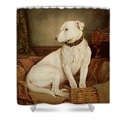 In Disgrace Shower Curtain by William Woodhouse