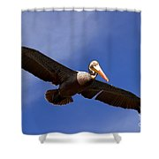 In Flight Pelican Shower Curtain
