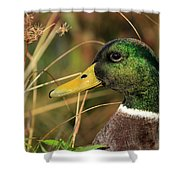In The High Weeds Shower Curtain