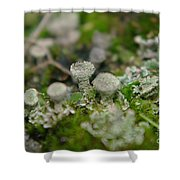 In The Land Of Little Mushrooms  Shower Curtain
