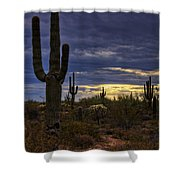 In The Shadow Of The Saguaro  Shower Curtain