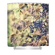 In The Vineyard Shower Curtain by Lisa Russo