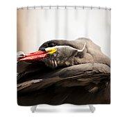Inca Tern Shower Curtain
