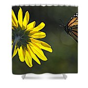 Incoming Monarch Shower Curtain