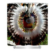 Indian Bustle Shower Curtain
