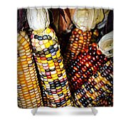Indian Corn 2 Shower Curtain