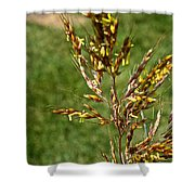 Indian Grass Seed Shower Curtain