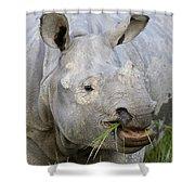 Indian Rhinoceros Grazing Kaziranga Shower Curtain