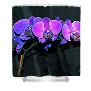 Indigo Mystique Orchids  Shower Curtain