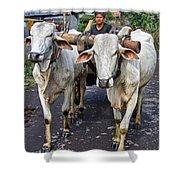 Indonesian Bovine Cart Shower Curtain