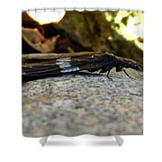 Insect Stripes Shower Curtain