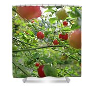 Inside The Red Huckleberry Shower Curtain