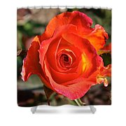 Intense Rose Shower Curtain