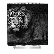 Intent Shower Curtain by Andrew Paranavitana