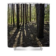 Into The Woods Spnc Michigan Shower Curtain