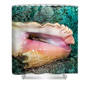 Inverted Conch Shower Curtain