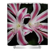 Inviting Lily Shower Curtain
