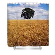 Ireland, Barley Field With Oak Tree Shower Curtain