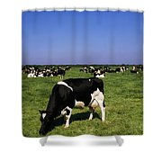 Ireland Friesian Cattle Shower Curtain