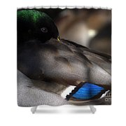 Iridescent Blue Shower Curtain by Sharon Talson