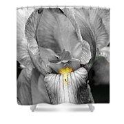 Iris - Bw Shower Curtain