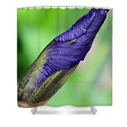 Iris And Friend Shower Curtain