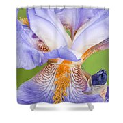 Iris Close Up Blue And Gold Shower Curtain