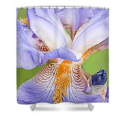 Iris Full Bloom Shower Curtain