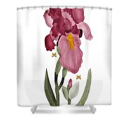 Iris II In Full Color Shower Curtain by Anne Norskog
