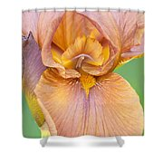 Iris In Gold  Shower Curtain