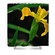 Iris In Yellow Shower Curtain