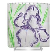 Iris Outlined Shower Curtain