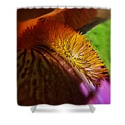 Iris Stamen Macro Shower Curtain