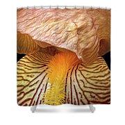 Iris Study Shower Curtain