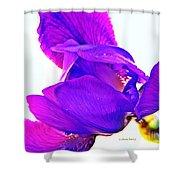 Iris Surprise  Shower Curtain