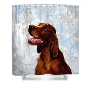 Irish Red Setter Shower Curtain