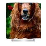 Irish Setter I Shower Curtain by Jenny Rainbow