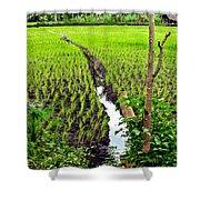 Irrigated Rice Field Shower Curtain