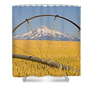 Irrigation Pipe In Wheat Field With Shower Curtain