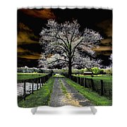 Isolated Shower Curtain