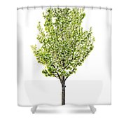 Isolated Flowering Pear Tree Shower Curtain