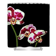 Isolated Orchids Shower Curtain