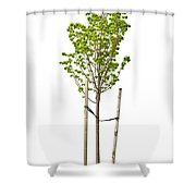 Isolated Young Linden Tree Shower Curtain