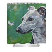 Italian Greyhound With Cabbage White Butterflies Shower Curtain