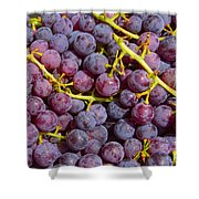Italian Red Grape Bunch Shower Curtain