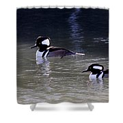It's A Hooded Merganser Guy Thing Shower Curtain