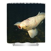 Its Bug Time Shower Curtain