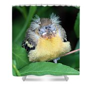 It's Nap Time Shower Curtain